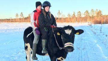Irina Ala-Kopsala och Senja Meriläinen på kon Omena.