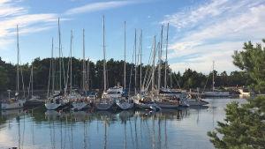 Segelbåtar ligger i hamn