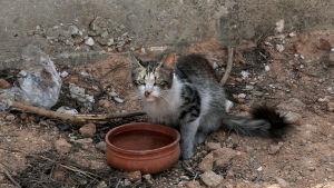 En katt med brännskador försöker dricka vatten utanför ett brandskadat hus i Rafina.