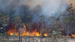 Markbränder i East Gippsland i delstaten Victoria.