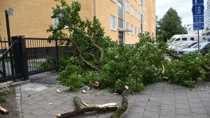 En trädgren har fallit på gatan till följd av stormen.