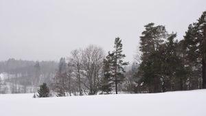 snöigt och grått landskap med kullar och träd