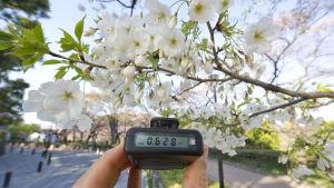En Geigermätare visar 0,628 mikrosievert per timme i Tokyo, tre veckor efter olyckan i Fukushima 2011.