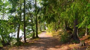 Skogsstig vid Sibboviken.