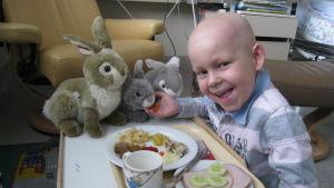 Sexåriga Todde som har leukemi på sjukhus glatt krafsande sina mjukisskaniner vid matbordet.