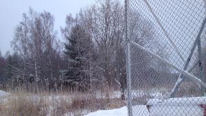 Skogen bakom isbanorna i Ingå där det knappast byggs hus på bostadsmässan i Ingå.