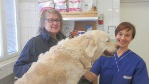 Carina Päivärinta på besök med sin hund hos stadsveterinär Malena Flink