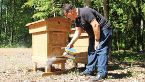 Kamran Fakhimzadeh savuttaa mehiläispesän sisäänkäynti. Pesä on puinen.