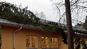 Ett stort träd har fallit över taket på ett gult hus.