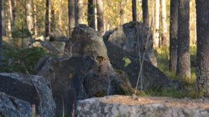 Pansarvagnshinder i Harparskog.
