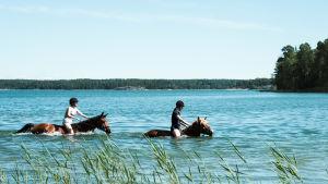 Två ryttare simmar med hästar.