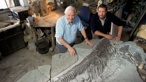 Britanniasta löydettiin merkittävä fossiili, jurakautinen iktyosaurus. Oliko tarujen merihirviö sittenkin olemassa?