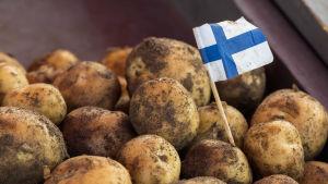 En hög med jordig nypotatis på ett bord. I en potatis sitter det en liten finsk flagga.