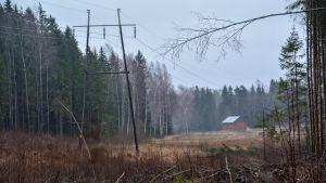 Elledningar i grått skogslandskap.