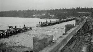 Pioneerit rakentavat väliaikaista siltaa tuhotun tilalle lähellä Ivaloa vuonna 1944.