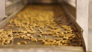 Torrfoder för hundar rullar fram på en produktionslinje.