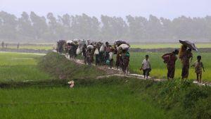 Burmesiska flyktingar flyr till Bangladesh.