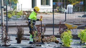 Kvinna planterar buskar framför Vårberga bildningscentrum.