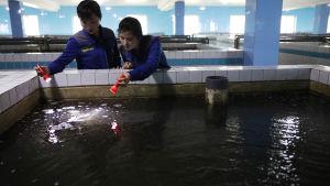 Nordkoreansk fisk från bland annat fiskodlingar säljs fortfarande i Kina trots rådande FN-sanktioner