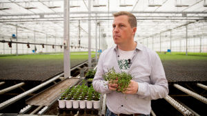 Robert Jordas puutarhuri Lapinjärveltä.