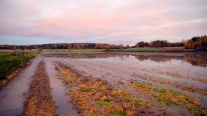 Fullt med vatten på en åker i Västankvarn då det regnat så mycket hösten 2017.