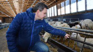 Anders Norrback med sina får.