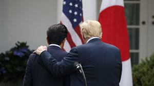 Shinzo Abe och Donald Trump lämnar presskonferensen i Vita husets rosenträdgård.