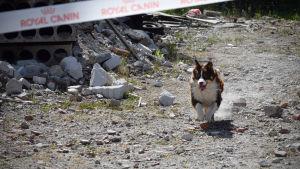 En hund som springer