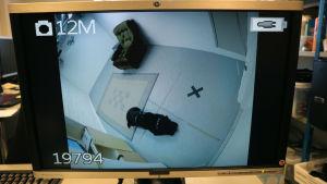 tietokoneruudulla kuva koirasta tutkimushuoneessa