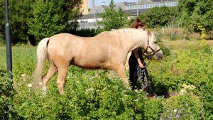 En häst leds igenom odlingslotten vid Anneberg.