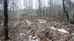 En gammal överväxt husgrund. Marken är täckt av bruna löv och i bakgrunden syns ett rött gammalt hus.