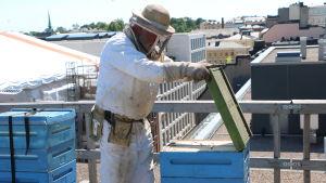 Bjarne Bruce inspekterar en bikupa på Savoys tak.