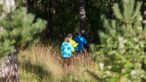 Tre barn på avstånd. De är på en äng och på väg in i en skog. De går med ryggen till.