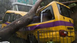 En buss i Hongkong har förstörts av ett träd som fallit över den.