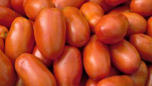 Tomater i Apulien