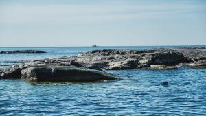 Vedessä näkyy hylkeen pää karikon vieressä. Taustalla horisontissa siintää majakka.