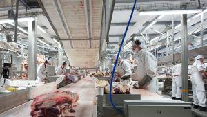 Kött på löpande band i Atrias fabrik i Kauhajoki.