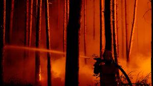 Skogsbrand sydväst om Berlin