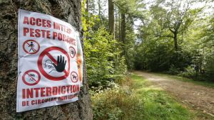 Område avstängt i Belgien på grund av svinpest.