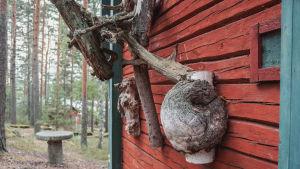 Flera krokiga trädgrenar och en träknöl upphängda på väggen till ett rödmyllemålat hus.