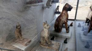 Bild på kattstatyer som hittades i Egypten