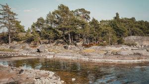 Kalliota ja rantaa Dalskär-saarella, Saaristomerellä, toukokuussa.