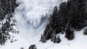 Lumivyöry metsäisessä rinteessä.