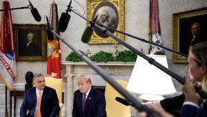 Ungerns premiärminister Viktor Orban och USA:s president Donald Trump under en pressträff i Ovala rummet 13.5.