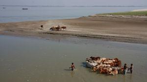 Svårt att odla i Bangladesh