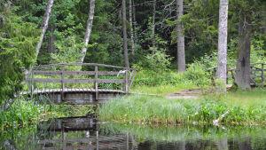 Bild på en damm med en träbro. En fågel flyger.