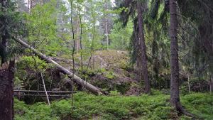 Bild på ett litet berg i en skog.