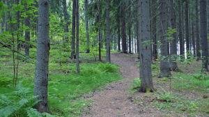 Skog i gammelbacka.
