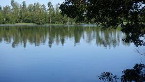 Sjöarna är kräftornas hem, fast alla sjöar duger inte. I vissa har kräftpesten också farit hårt fram.
