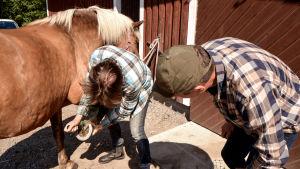 Man skrapar hoven på en häst.